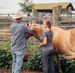 two people handling a horse equine therapy program